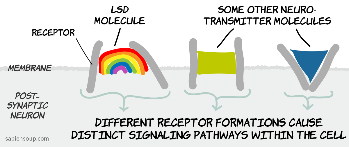 Functional selectivity: ligand dependent signaling of the receptor