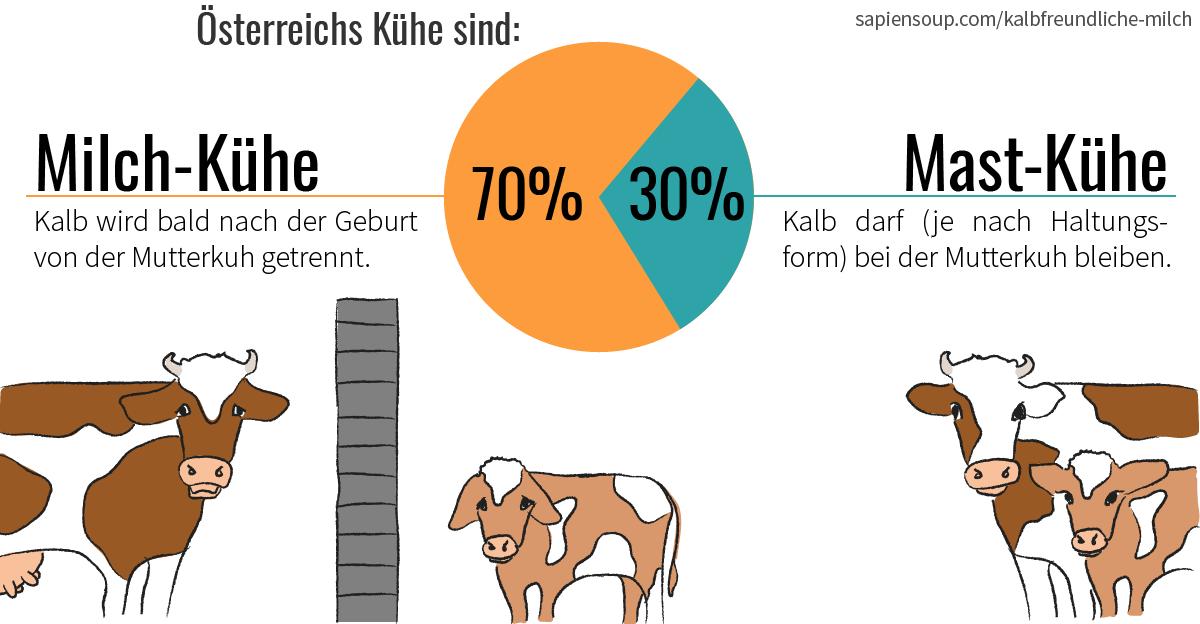 Kühe in Österreich sind 70% Milchvieh und 30% Mastvieh