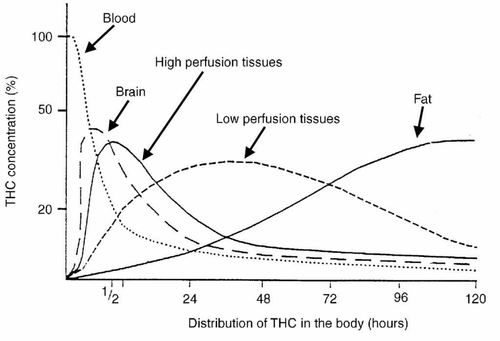Distribution of THC in the body over time.