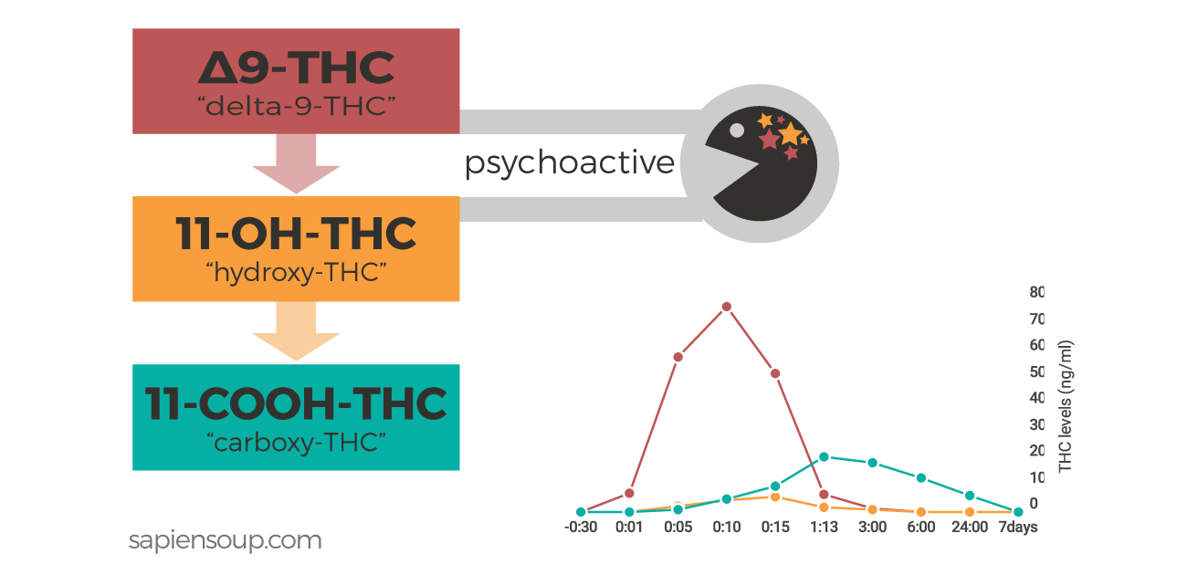 Human Metabolism THC FB human metabolism of thc sapiensoup blog
