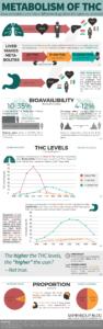 Thumbnail-Infographic-Human-Metabolism-THC