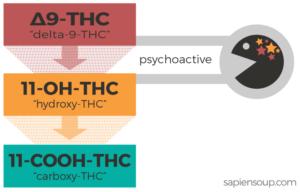 Metabolites-of-THC